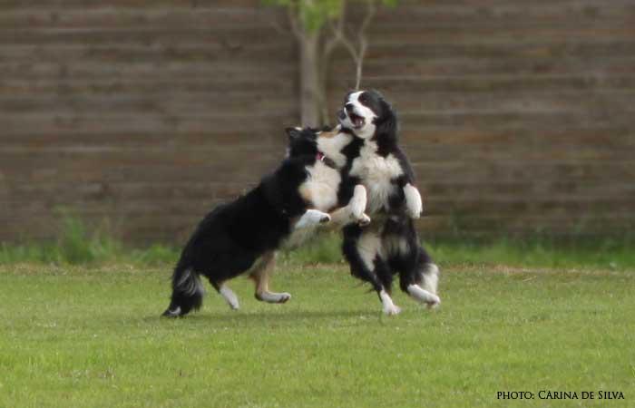 Sookie leger med mor Rita