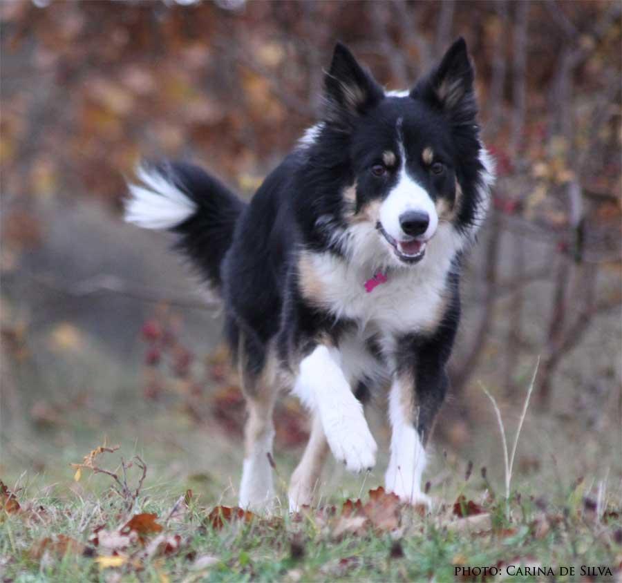 Sookie 1 år