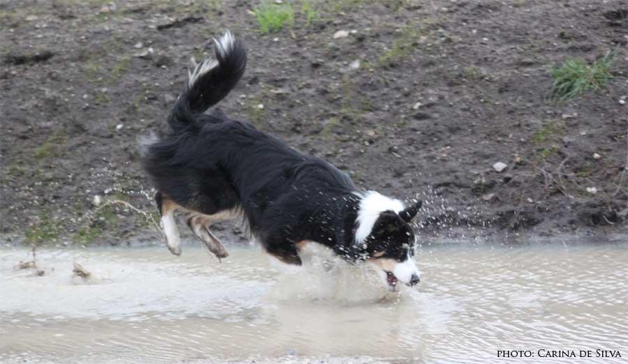 Sookie leger i vandpyt