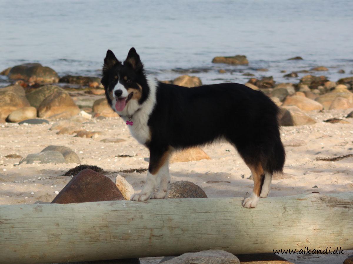 Balanceøvelser er sjove - Sookie finder selv på at balancere rundt på pæle og store sten