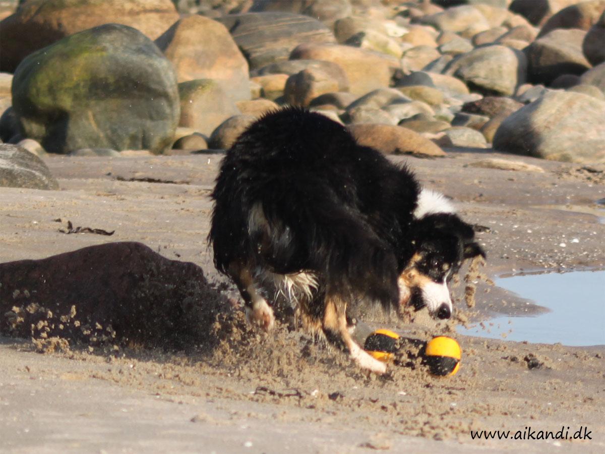 Sookie henter legetøjet - i stor fart ;-)