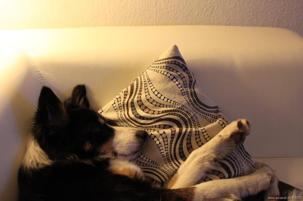 Sookie - træt efter en lang og oplevelsesrig dag