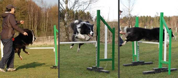 Kopy springer