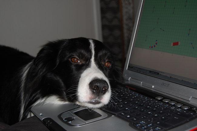 Kopy med hovedet på tastaturet