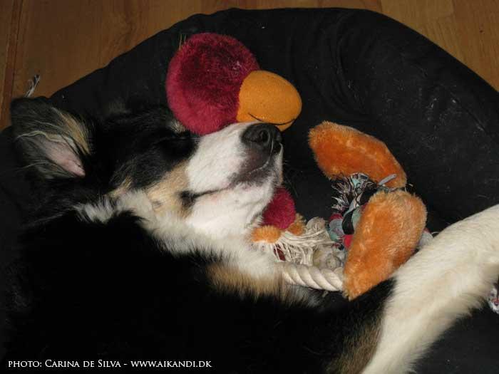 Sookie sover med fuglen uden øjne