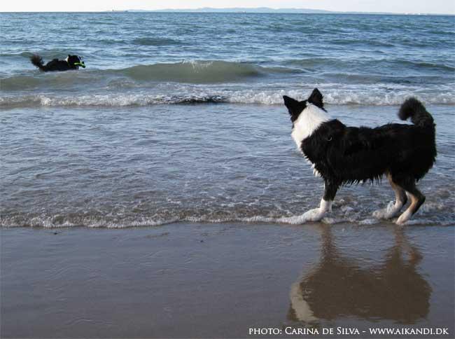 Elliot i vandet efter legetøjet og Sookie kigger på