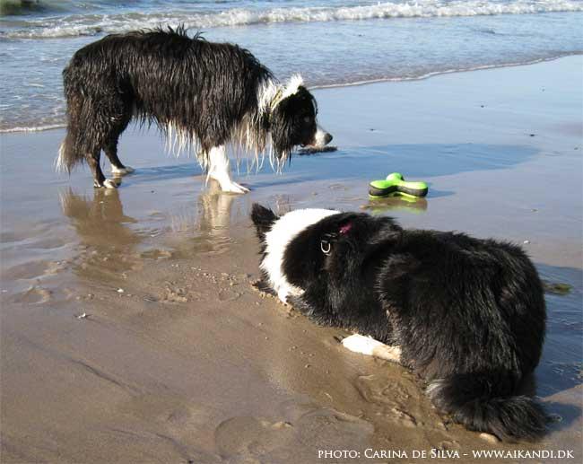 Elliot venter på legetøjet bliver kastet - Sookie studerer sit hul blive fyldt med vand