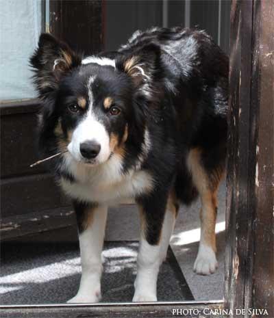 Sookie øver stå i døren