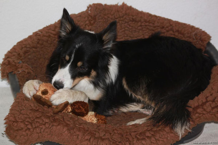 Sookie med sit legetøj