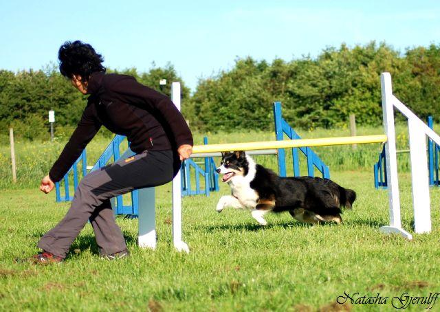 Træner at hente hunden rundt om springet