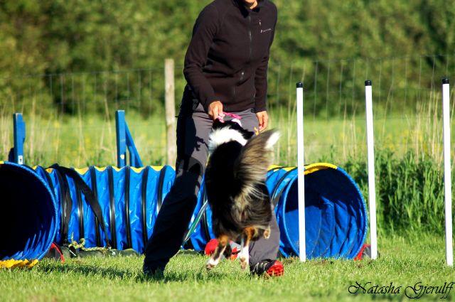 Sookie springer efter legetøjet - beløn, beløn :-)