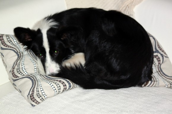 Prinsessen blev træt af at hyrde og mente at hun havde fortjent en lur i sofaen ;)