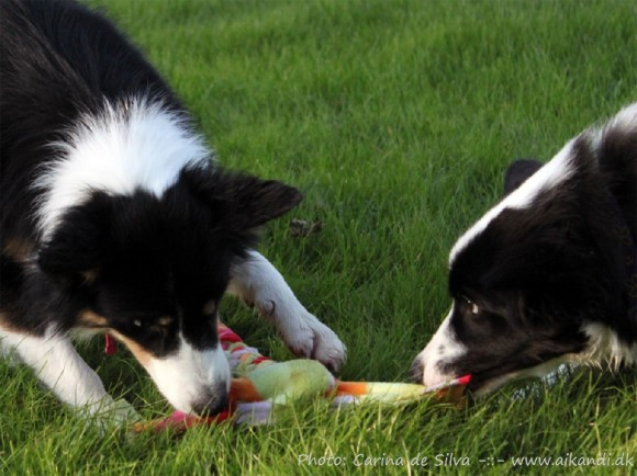 play together?