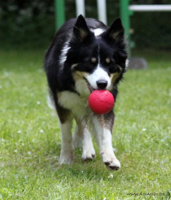 Sookie med yndlingsbolden