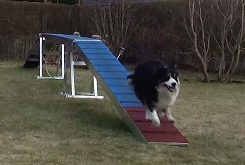 Sookie træner løbefelt