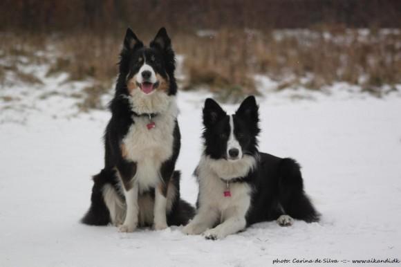 Sookie & Vini - January 2012
