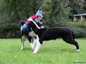 Sookie & Vini leger med Kong-Kanin