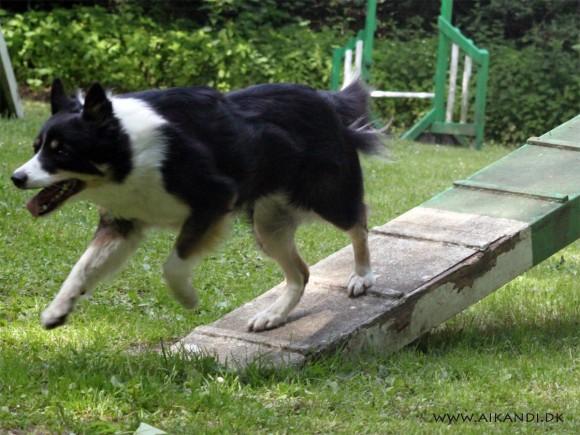 Sookie kommer nu langt ned på feltet - selv på de lange balancebomme :-)