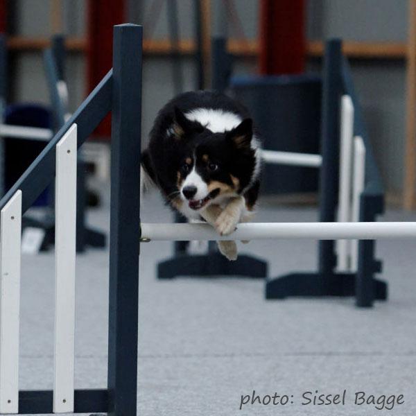 Sookie i fin stil over springet - og nej, hun river ikke overliggeren ned