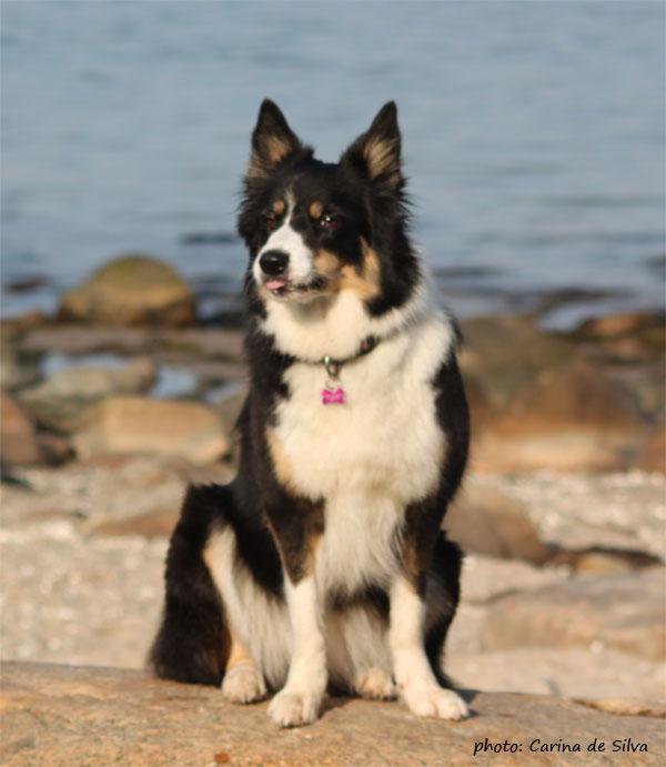 Sookie 2 år