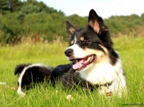 Min super dejlige Sookie :)